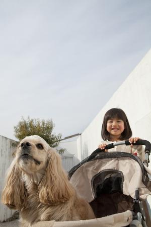 animal woman: girl pushing a cart that American Cocker Spaniel was riding