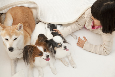 sprawl: Shiba Inu and Papillon two dogs and girls that entered the futon Stock Photo