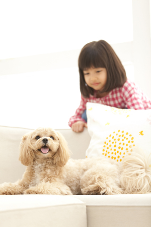 poodle mix: Girls and Marupu