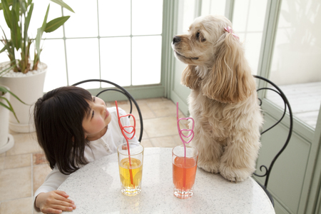 american cocker spaniel: American Cocker Spaniel and the girl sitting in a chair Stock Photo