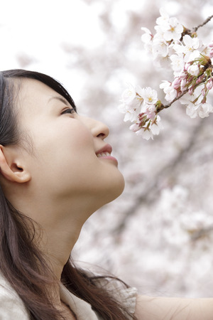 sniff: Women smell the scent of cherry blossoms Stock Photo