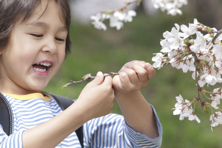 grasp: Boy smile grasp the branches of the cherry tree