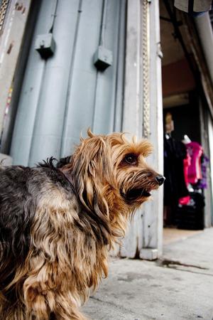 通りを歩く犬