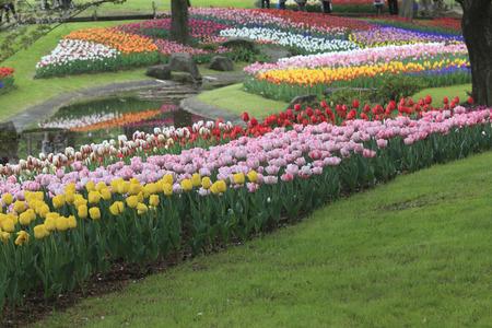 flower garden path: Showa Memorial Park Tulip Stock Photo