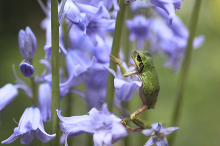 And flower frogs 写真素材