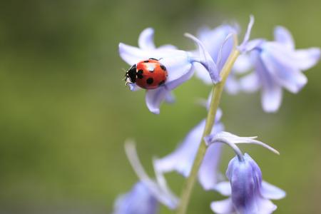 Flowers and ladybugs