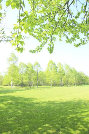 clear sky: Fresh green trees