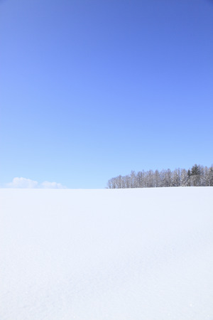 accretion: Windbreaks that a snowy field snow accretion
