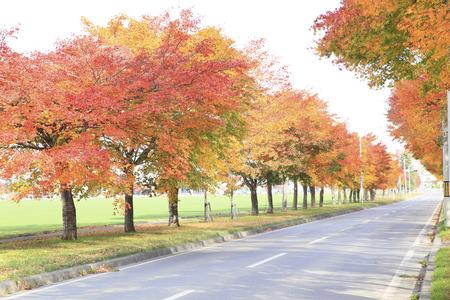 treelined: Autumn leaves, tree-lined street Stock Photo