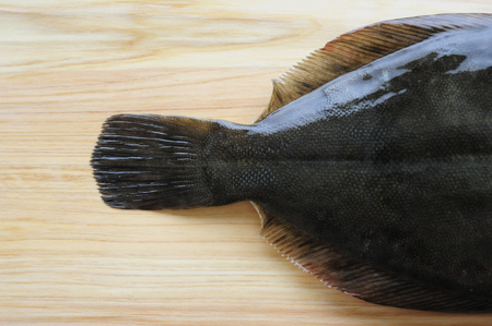 caudal fin: Tail fin of turbot on the cutting board