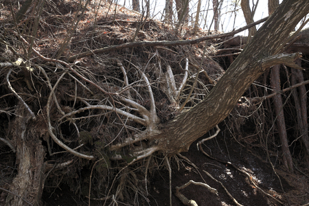 has been: Wood that has been washed roots
