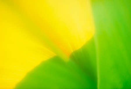 image: Flower image