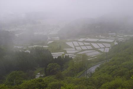 gradas: Rice terraces