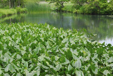 waterside: Waterside landscape Stock Photo