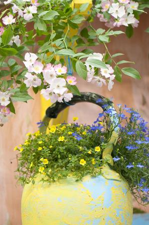 florets: Blue and yellow florets