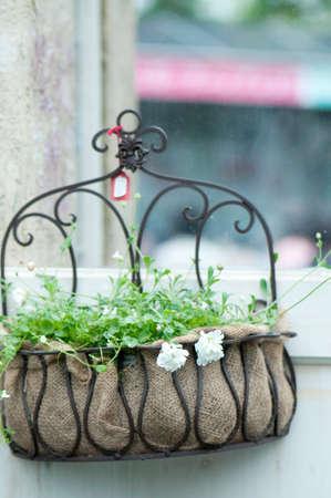 hanging basket: Hanging basket Stock Photo