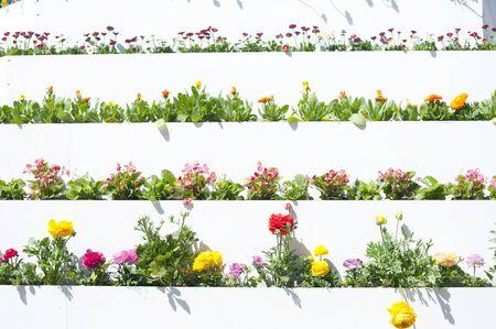 flowerbed: Spring flowerbed Stock Photo