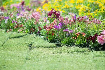 massif de fleurs: Printemps parterre