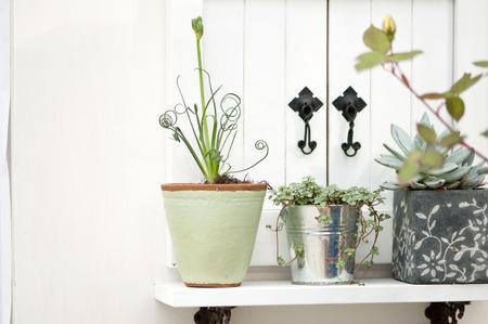 adorning: Houseplant display