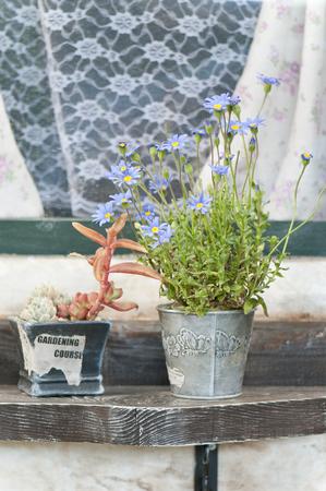 青いデイジーと多肉植物