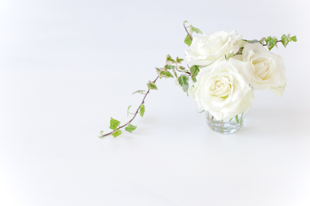 Naughty white rose vase Banque d'images