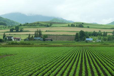 감자 밭 풍경 스톡 콘텐츠