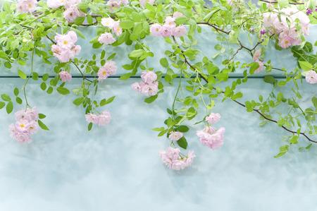 Rose garden Stock Photo - 46290995