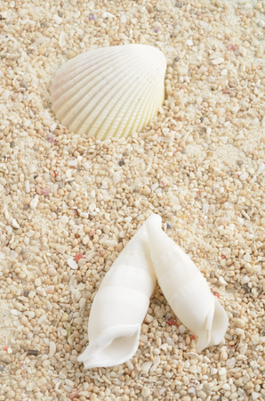 coolness: Shells on the sea sand Stock Photo