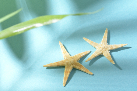 to shade: The shade of a tree and starfish Stock Photo