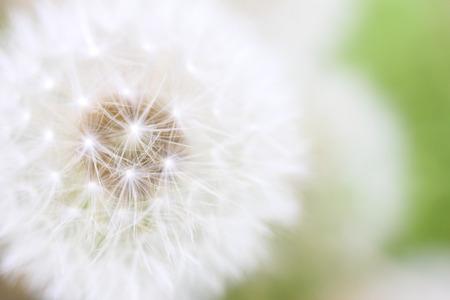 Dandelion fluff Imagens