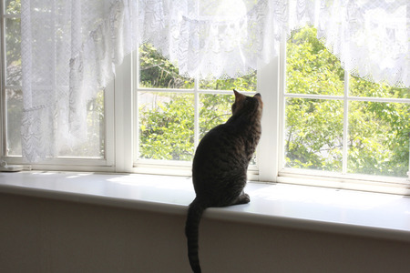 Rear View silhouette of the windowsill of cat