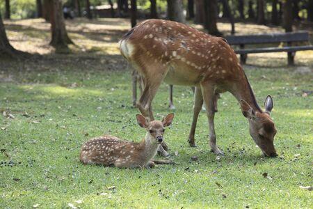 nara: NARA Park deer Stock Photo