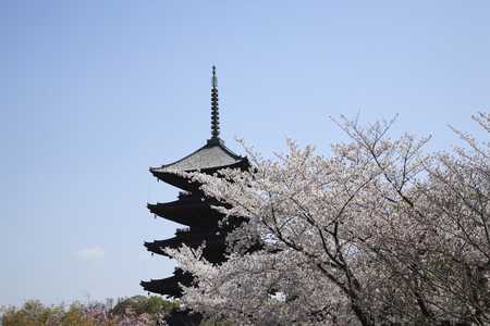 cultural artifacts: Cherry Blossom Temple