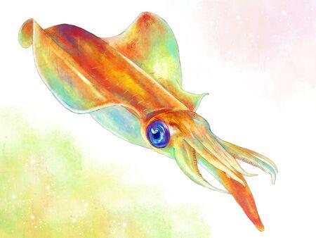 Squid Banque d'images