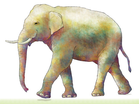 mammalian: Elephant Stock Photo