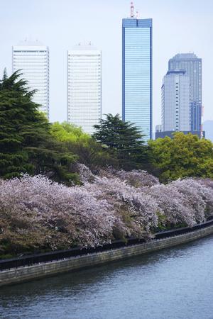 along: Okawa along the cherry trees and the OBP Stock Photo