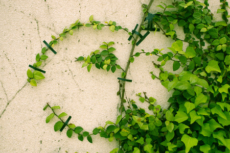 upbringing: Discipline of ivy that the crawl on the wall