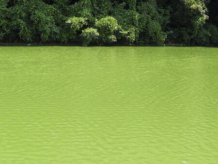 藻によって変色された池 写真素材