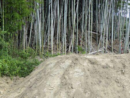 建設のため破壊された竹林