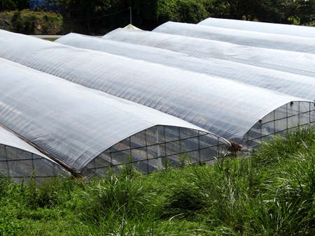 cultivation: Greenhouse cultivation of vegetables