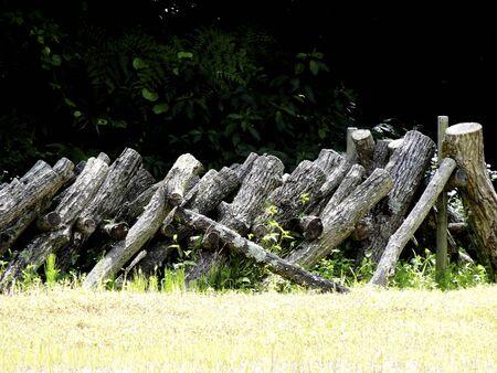 Shiitake of raw wood