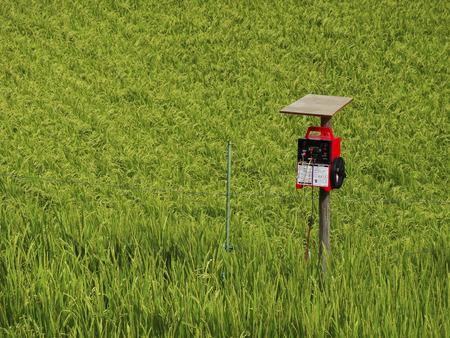 electric fence: Yamadas rice electric fence Stock Photo