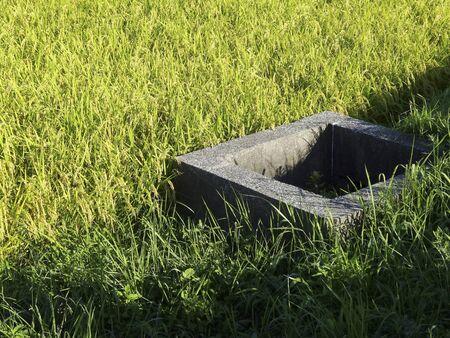 weir: Rice fields of water supply weir