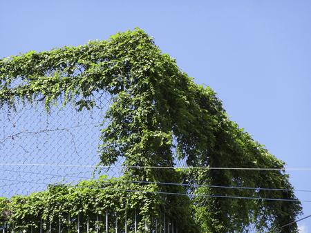 都市緑化運動