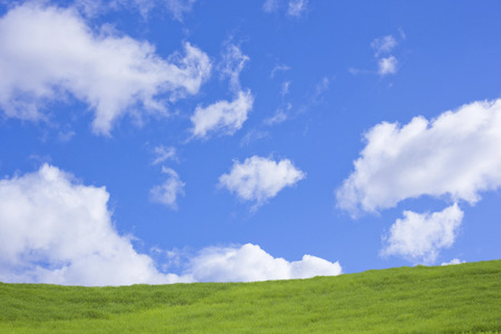 blue sky: Grass with blue sky Stock Photo