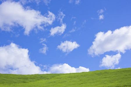 herbe ciel: Herbe avec le ciel bleu