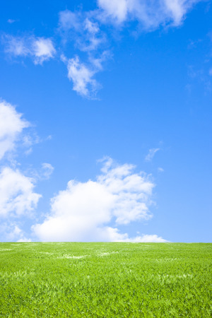 Grass with blue sky Stock Photo