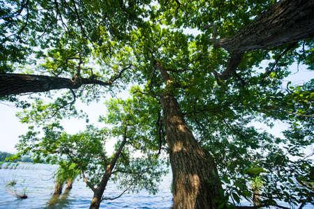 lakeside: Lakeside trees Stock Photo