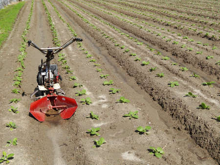 cultivator: Cultivator