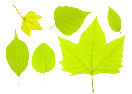 新鮮な緑の葉 写真素材 - 49313702